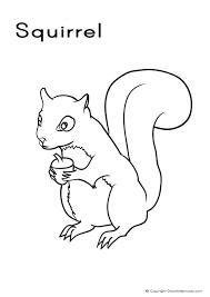 picture squirrel color picture squirrel color