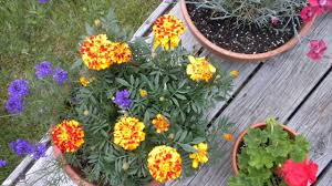 is butterfly garden can be planted in containers how to do