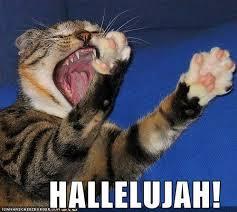 Grumpy Cat Snow Meme - new grumpy cat snow meme hallelujah cat memes 80 skiparty wallpaper