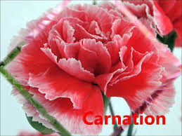 names of different flowers wmv youtube