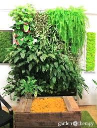 Indoor Vertical Gardens - indoor vertical vegetable garden diy tag vertical garden indoor
