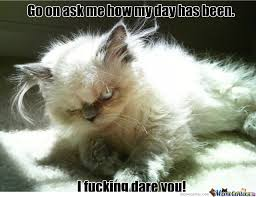Meme Angry Cat - angry kitten memes best collection of funny angry kitten pictures