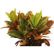 low light outdoor plants live indoor plants