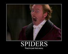 Funny Spider Meme Pictures To - funnyspiders0024 o jpg