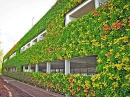 wall ideas living wall design living walls atlanta 2016 living