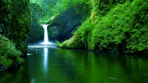 the 10 nature green color hd wallpapers good for your eyes