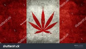 Colorado Flag Marijuana Marijuana Leaf Replacing Maple Leaf On Stock Illustration