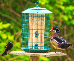 qualtiy wild bird seed what u0027s best