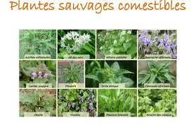 cuisine plantes sauvages comestibles loisirs atelier découverte récolte et cuisine de plantes sauvages