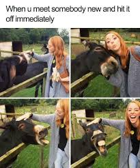 Soon Horse Meme - 29 wholesome animal memes pleated jeans