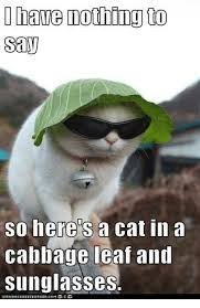 Nothing To Say Meme - have nothing to say so here s a cat in a cabbage leaf and