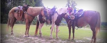 a ranch horse for sale horse ranch horseback riding horse riding