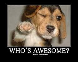 You Are Awesome Meme - image 66552 who s awesome you re awesome sos groso