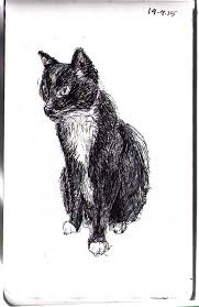 austin the cat sketch in ballpoint pen one drawing daily