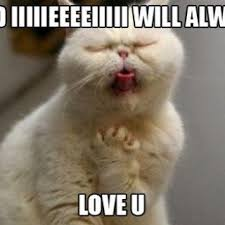 I Love You This Much Meme - tag for i love you cat 17 ways your cat says i love you you this