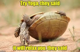 Turtle Memes - turtle memes meme city