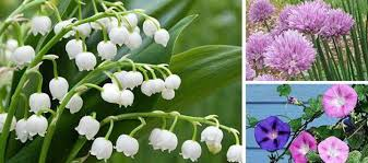 beautiful plants 10 beautiful plants that are secretly killing your garden ask a