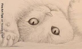 how to draw a cat sketch of a cat youtube