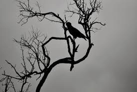 black and white wildlife photography texture loversiq