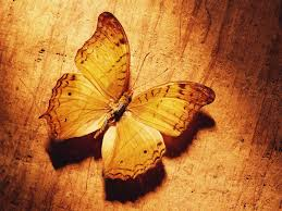 lovely u0026 beautiful birds butterfly hd wallpapers photos and images