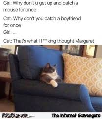 Sarcastic Cat Meme - get up and catch a mouse for once funny sarcastic cat meme pmslweb