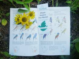 bird friendly native plants audubon elliotborough garden party audubon south carolina