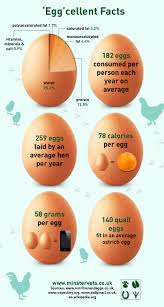 facts about eggs infographic