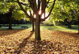 the delicious signs of autumn appear in s green park