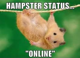 Dramatic Squirrel Meme - 53 very funny hamster meme gifs images pictures picsmine