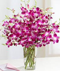 orchid flower arrangements purple dendrobium orchids daily sun orchid and beautiful flowers
