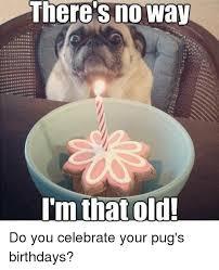 Pug Birthday Meme - 25 best memes about pug birthday pug birthday memes