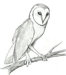 top 83 barn owl clip art free clipart image