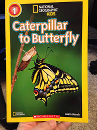 caterpillar to butterfly book from sort it apps