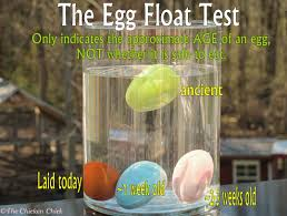 the chicken egg float test indicates approximate age not