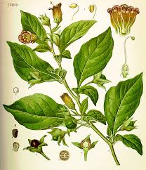 not poison in n d a list of poisonous plants and herbs and their lore exemplore