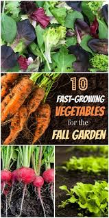 Fall Root Vegetables - best 25 fall planting vegetables ideas on pinterest winter
