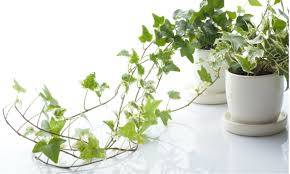 Best Plants For Bedrooms Choose Some Of These Great Plants For Your Home Mygubbi