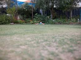 artificial grass installation dog backyard after easy turf loversiq