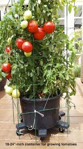 25 trending patio tomatoes ideas on pinterest tomato garden