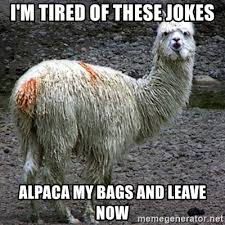 Alpaca Memes - i m tired of these jokes alpaca my bags and leave now drama llama