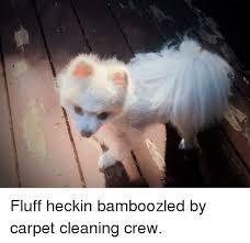 Carpet Cleaning Meme - carpet and carpet meme on me me