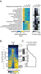 supplements goal reference guide audio torrent spatiotemporal coupling and decoupling of gene transcription with