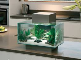 designer aquarium fluval edge click for details bespoke designer aquariums