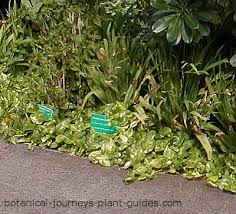 Tropical Rainforest Plant List - types of tropical rainforest plants exotic garden plant list