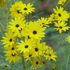 perennial plants for fall perennial flowers hgtv 10 best yellow flower bed images on pinterest flower beds flower