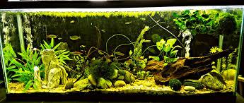 Aquascape Takashi Amano Aquascaping Styles Fashionable Fish Tanks For Every Home U2013 Pet