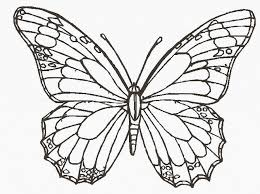 butterfly images for drawing butterfly drawings in pencil pencil