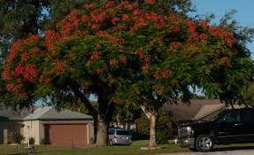 landscape trees and shrubs page 4