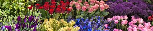 different types of roses australian cut flower industry