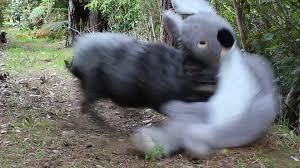 Angry Koala Meme - printable angry koala bear